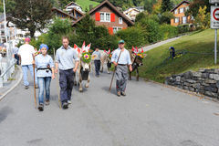 Farmers with a herd of cows on the annual transhumance on the st Stock Images