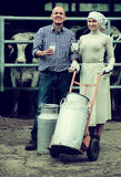 Farmers holding large metallic milk cans. Smiling male and female farmers holding large metallic milk cans in hangar with cows Stock Photos
