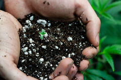 Farmers holding soil with baby pot plant Royalty Free Stock Image