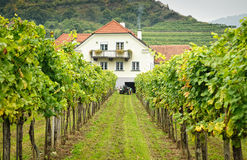 Farmers House in a Vineyard Stock Photos