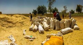 Farmers In Iraqi countryside Royalty Free Stock Photo