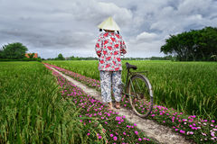 Farmers leads bicycles to go the end of road Royalty Free Stock Images