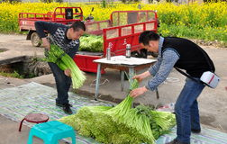 Pengzhou, China: Farmers Loading Garlic Royalty Free Stock Photo
