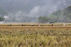 Farmers in Mai Chau. Farmers working at the farmland in Mai Chau Vietnam Stock Photo