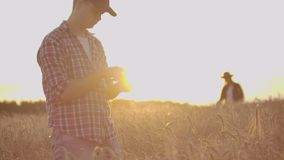 Farmers man and woman in hats and tablets at sunset in a wheat field and shirts inspect and touch the grain and wheat stock video footage