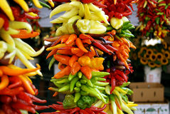 Farmers Market. Colorful chili peppers on display at a farmers market Stock Image