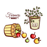 Farmers Market Apples Salad. Farmers market. Local food. Basket of fresh apples and salad isolated on white background. Hand drawn vector illustration Stock Images