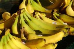 Farmers Market Bananas. Bunches of Bananas in a sidewalk market royalty free stock photos