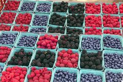 Farmers' Market Berries #2. Blueberries, blackberries, and raspberries in cartons arranged for sale at farmers' market Stock Images