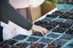 Farmers Market berries stock images