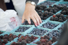 Farmers Market berry selection Stock Images