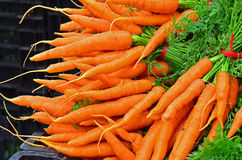 Farmers Market bunches of fresh carrots. A piled bunches of fresh carrots on display at a local farmers market, ready for the picking Royalty Free Stock Image