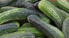 Farmers Market Cucumbers. A variety of fresh cucumbers at a farmers market royalty free stock photo
