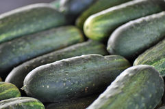 Farmers Market Cucumbers Stock Image