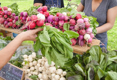 Farmers' Market. Display of local produce at outdoor farmers' market Royalty Free Stock Photos