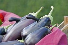 Farmers Market eggplant stock images