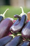 Farmers Market eggplant nose Stock Photo