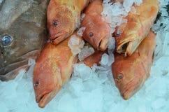 Farmers Market fish Royalty Free Stock Photos