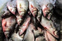 Farmers Market fish Stock Photo