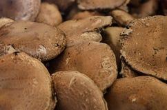 Farmers Market fresh portabella mushrooms Royalty Free Stock Photos