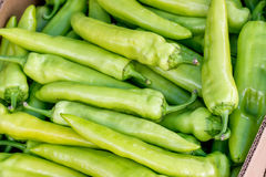 Farmers market green pepper in a crate Stock Photography