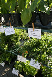 Farmers Market Herbs. For Sale in Venice, FL stock images