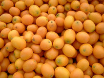 Farmers Market Kumquats Stock Image