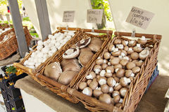 Farmers market mushrooms Stock Photography