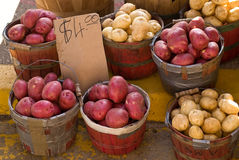 Farmers' Market Potato Display. A display of various types of potatoes in baskets royalty free stock photo