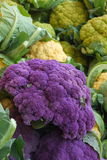 Farmers market: purple and yellow cauliflowers Royalty Free Stock Images