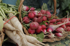 Farmers Market Radish. White and red radish in a bundle at a farmers market Stock Photography