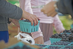 Farmers market sale. Customer taking bag of produce after completing transaction at a farmers market Royalty Free Stock Photo