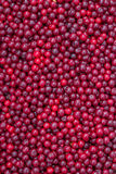 Farmers market sour cherry background Stock Images