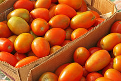 Farmers Market Tomatoes. Farmers Market roma tomatoes in boxes Stock Images