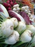 Farmers Market vegetables: fennel. Organic fennel and radicchio at Farmers Market Royalty Free Stock Photography