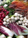 Farmers Market vegetables: radicchio and turnips. Organic radicchio, radishes, turnips and carrots at Farmers Market Royalty Free Stock Image