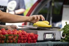Farmers market vendor weighs yellow squash on old scale with tomatoes and basil in foreground and blurred background stock photos