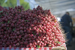 Farmers Mkt pile of radishes Royalty Free Stock Photo