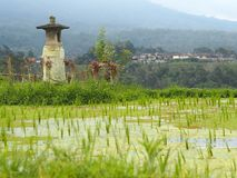 Small temple for offerings, rice field and village in Bali, Indonesia stock images