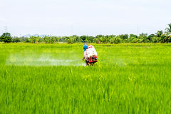 Farmers pesticides in the fields Stock Photos