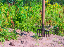 Farmers pitchfork standing upright Royalty Free Stock Image
