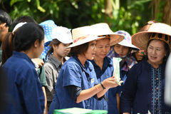Farmers planting rice by demonstrating sufficient economy Stock Photo