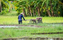 Farmers are planting rice in the farm Royalty Free Stock Photos