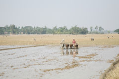 Farmers plowing agricultural field Royalty Free Stock Images