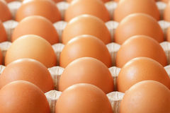Farmers raw eggs in tray Royalty Free Stock Images