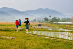 Farmers on rice field in Laos. Farmers on the rice fields with water buffalo in Laos, Southeast Asia royalty free stock images