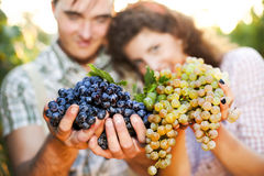 Farmers showing grapes. Farmers showing red and white grapes Stock Photo