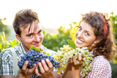 Farmers showing grapes Royalty Free Stock Photos