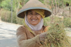 Farmers smile. A smiley farmer in the middle of rice field Royalty Free Stock Photo
