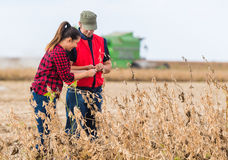 Farmers in soybean fields before harvest. Young farmers in soybean fields before harvest Stock Photography